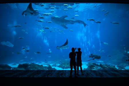 People observing fish at the aquarium photo