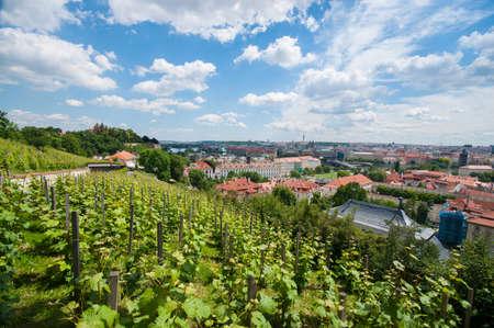 Vineyard in Prague near castle Stock Photo