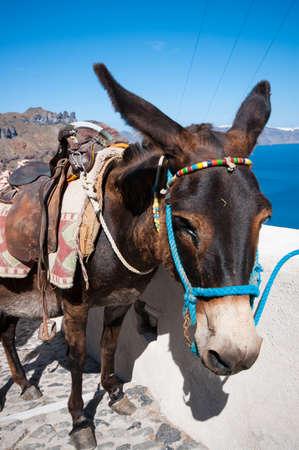 Donkey in Santorini Greece Stock Photo