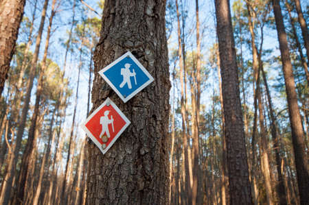 Red and blue hiking trail makers on a tree in the woods