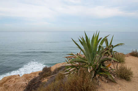 Sunset cliffs in San Diego with giant aloe