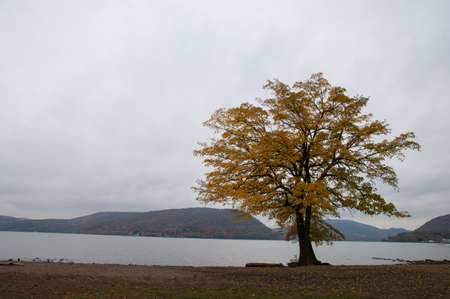 Fall foliage lone trees at river front with cloudy hudson river