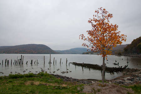 Fall foliage lone trees at river front over cloudy hudson river Stock Photo