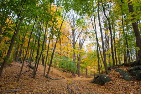 Path in the woods with fall foliage