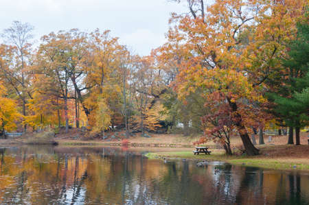 fall foliage with reflection in pond