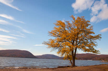 Fall foliage lone tree with Hudson river and mountains