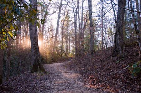 wnc: Sun rays peeking through trees in forest sunset