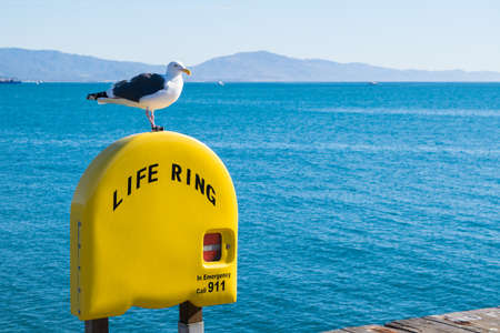 Seagull perched on life ring in Santa Barbara beach Stock Photo