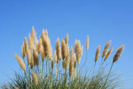 Plant under a blue sky