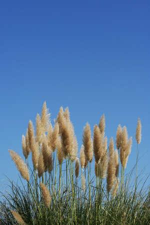 Plant sous un ciel bleu