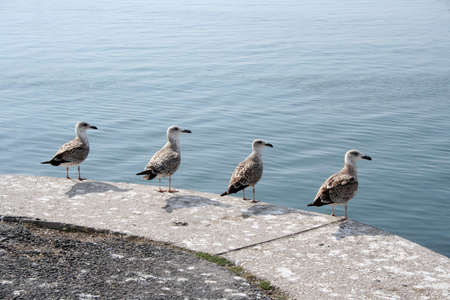 Four seagulls on a pear next to the ocean