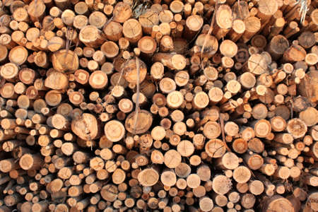 Logs of eucaliptus on a pile
