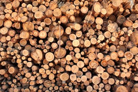 Logs of eucaliptus on a pile
