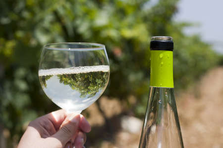 A wine bottle with a vineyard as background