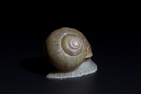gastropoda: Slow creeping snail back