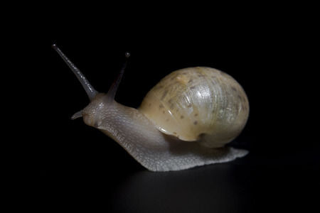 persevere: Slow crawling snail