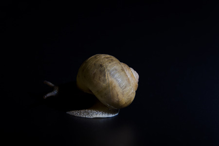 persevere: Slow creeping snail back