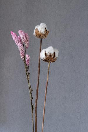 Cotton flower gerbera flower seeds