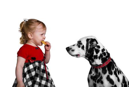 teases: Little girl eats cookies and teases Dalmatian dog photo studio