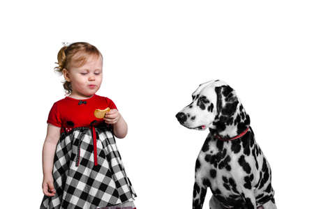 teases: Little girl eats cookies and teases Dalmatian dog photo studio