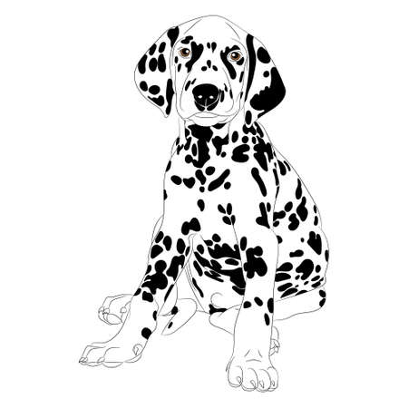 purebred dog: Illustration of a cute Dalmatian dog Puppy sitting isolate Illustration
