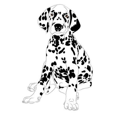 Ilustración de un cachorro de perro dálmata lindo que se sienta aislado