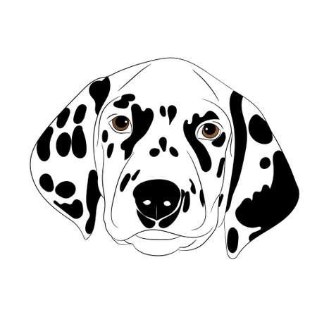 spotty: Spotty dog dalmatian with vector illustration closeup