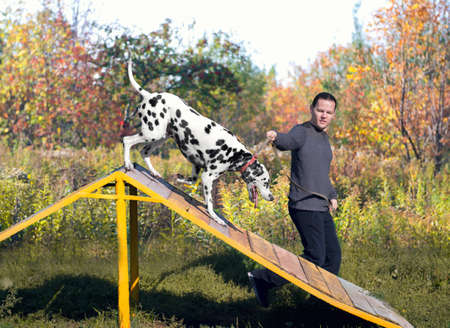 handler: Dalmatian dog with man handler  in nature on the training ground is jumping through a barrier in the form of slides - small DoF focus put only to pier Stock Photo