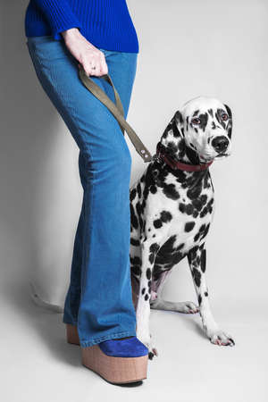 bottoms: Dog breed dalmatian sits next to her mistresss feet in blue jeans girl bottoms and platform shoes on a leash Stock Photo
