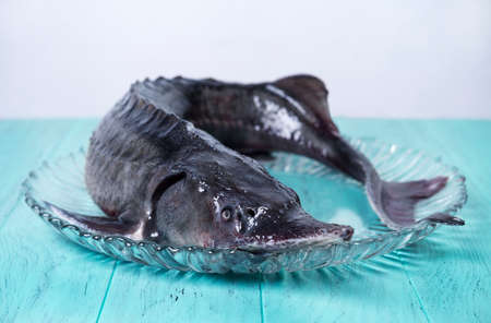 barbel: On the green-blue wooden background large clear glass dish with a large of whole raw fish sturgeon Stock Photo