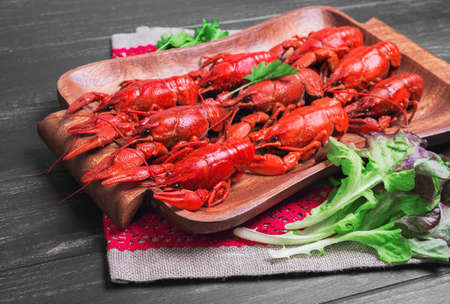 cancers: Cancers to beer, dill, boiled crawfish, beer snacks, green leaves of fresh lettuce, parsley on a wooden tray on a black dark wooden background