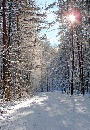 Winter snowy road thru morning pine wood Stock Photo