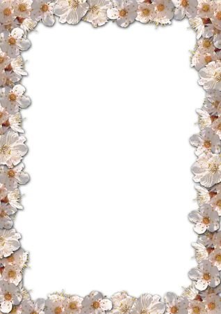 Floral border background with apricote flowers Stock Photo - 1050842