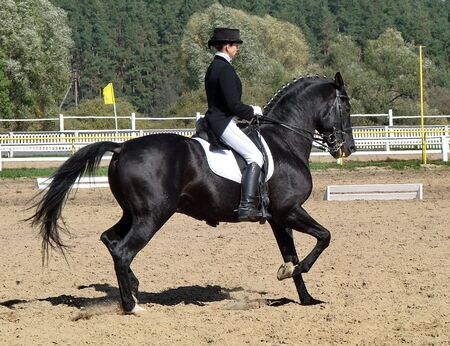 equestrian sportswoman riding black stallion horse