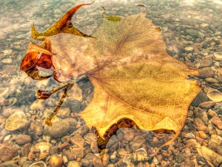 sycamore leaf: Yellow Leaf Underwater