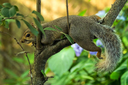 Relaxing Squirrel