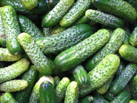Pickled Cucumbers Background Stock Photo - 15353834