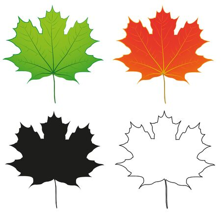 Green,Orange and Silhouette Maple Leaf  Object Illustration