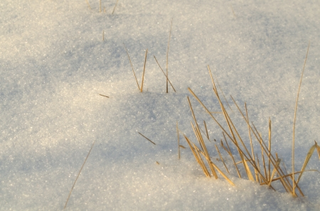 Snow surface, created by milions of small ice crystals and dried grass.