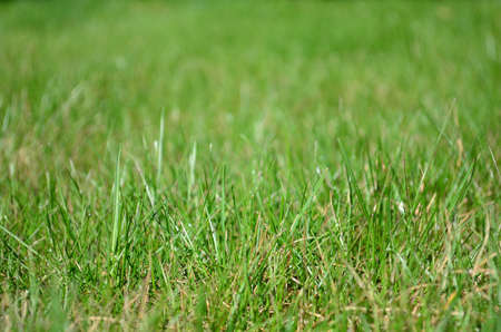 Meadow, field full of green grass in tide focus zoom and blured background. Stock Photo