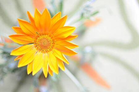 Orange Flower, Top View with Blurred Background  Stock Photo