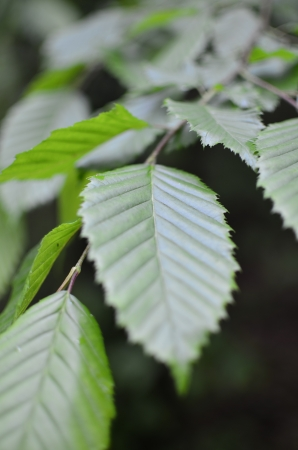 Green Leaf on Blurred Forest Background