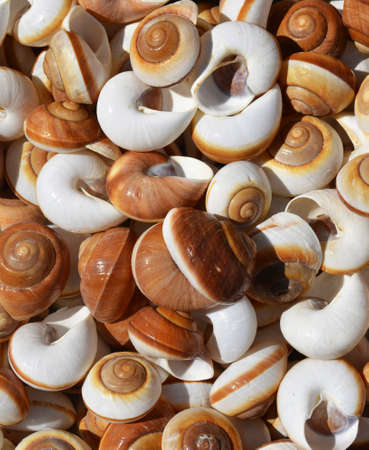 Collection of spiral sea shells background