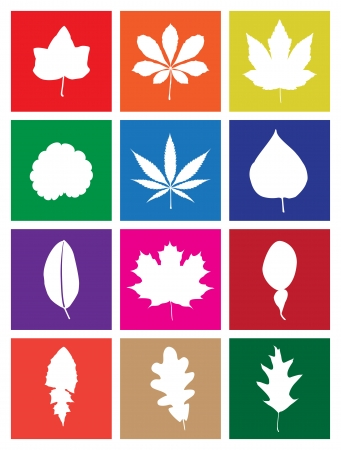 Leaves of Popular Plants in Flat Design Square Icons Vector