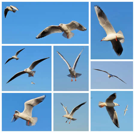 wingspread: Mosaic made of few pictures with white seagulls on blue sky as background Stock Photo