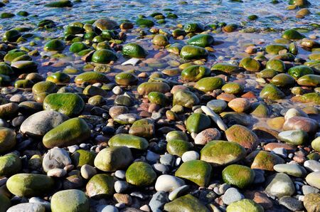 planted: Rocky beach flooded with water and planted by algae