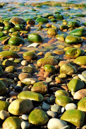 Rocky beach flooded with water and planted by algae