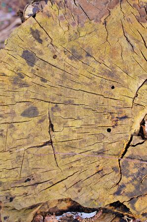 Tree rings after cutting the tree in half Stock Photo