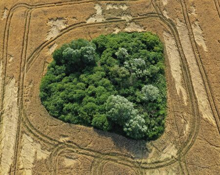Aerial drone perspective on damaged wheat field after wind storm, rural landscape with round shape forest.