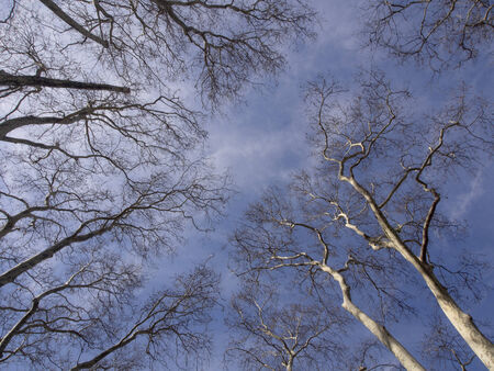 surreal trees in forest view from below  photo